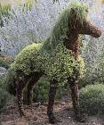 Mossed Horse Topiary